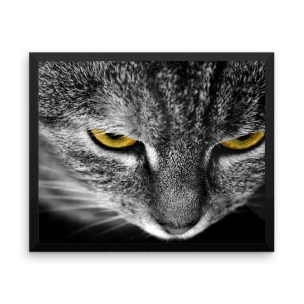 Cat Eyes 16 x 20 Framed Poster - BinXzay