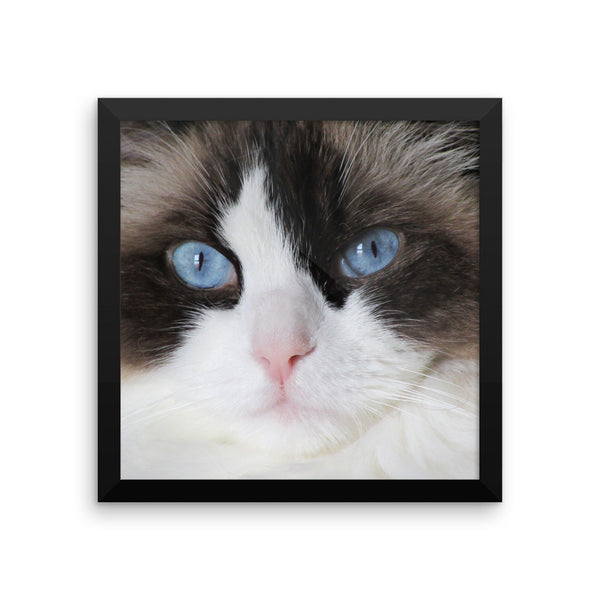 Ragdoll Cat Framed Wall Poster - Different Sizes Available - BinXzay