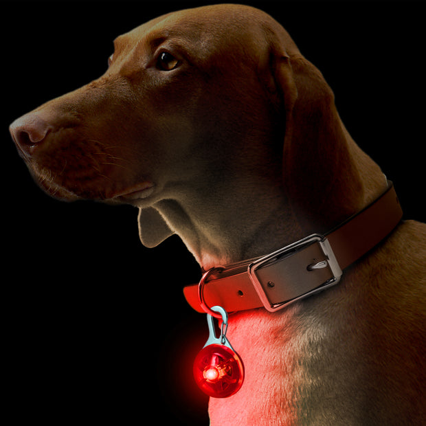 Be Seen Red LED Collar Light
