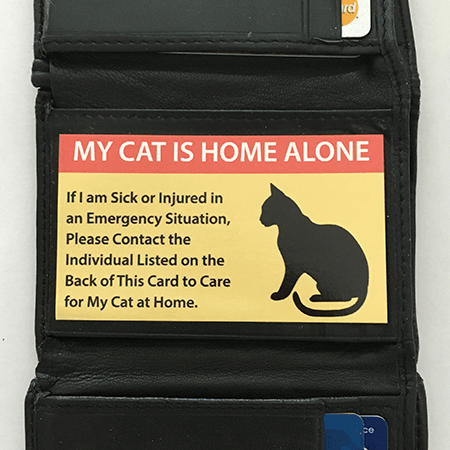 Pet Care Cards for Cats