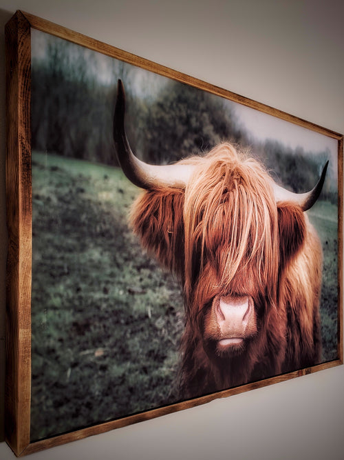 Highland Cow Framed