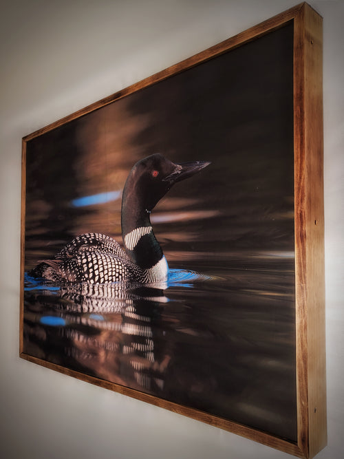 Canadian Loon Framed