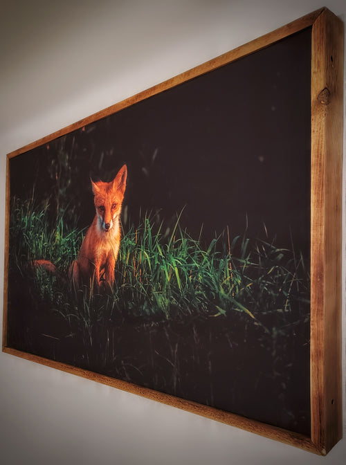 Red Fox Framed