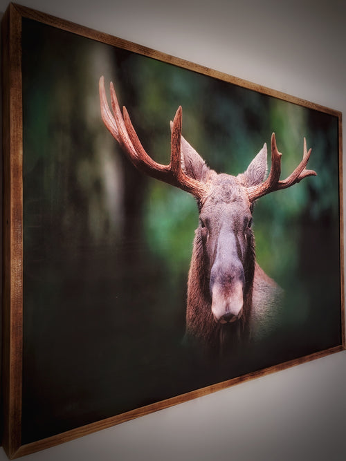 Moose Framed