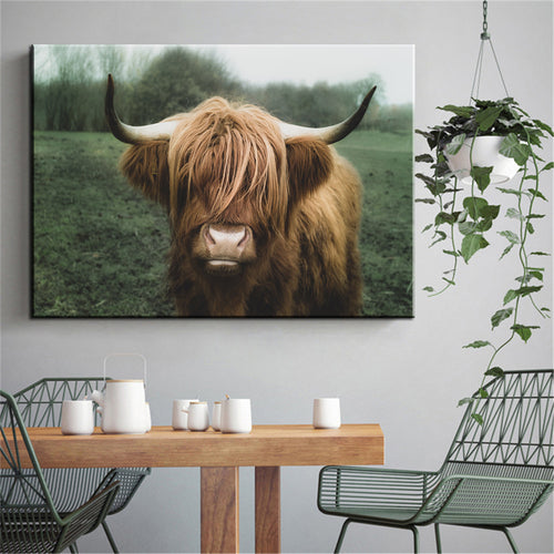 Highland Cattle 1.0