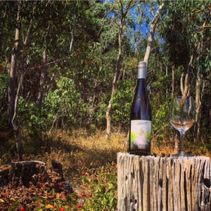 2014 Ghost Clare Valley Pinot Gris. Isn't she lovely?