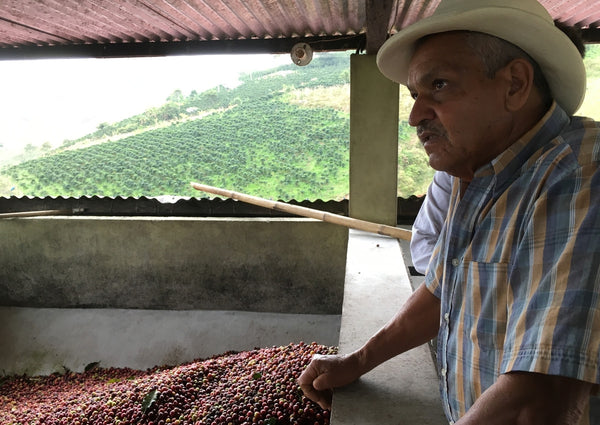 Sourcing Green Coffee with Collaborative Coffee