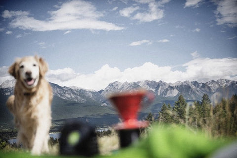 kicking horse coffee invermere