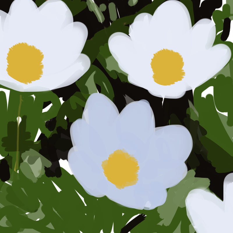 Sherry Pollack  -  Pop-Flowers White (/25), 2019