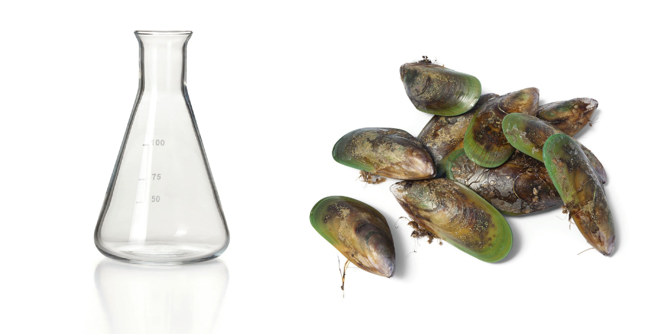 GLMax ®: 100% pure liquid Green-lipped mussel