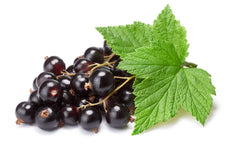 Blackcurrant leaf (Ribes nigrum)