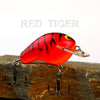Old School Balsa Baits Squarebill 1 in Red Tiger
