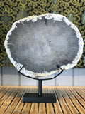 Petrified Wood Slice On Stand - Routes Gallery