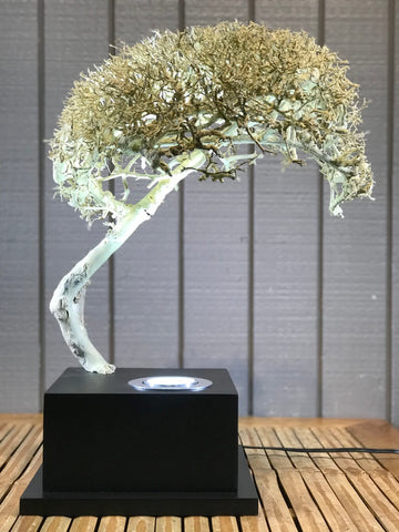 "Bonsai Style Deco Lamp Sculpture 18"" - Routes Gallery"