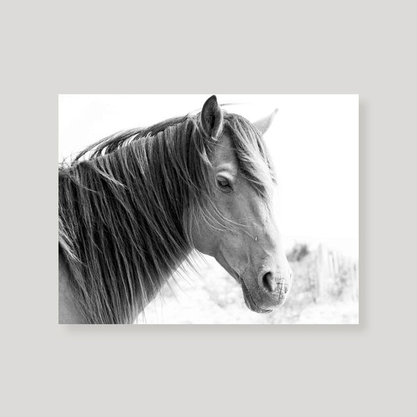 Assateague Island Pony Art Print