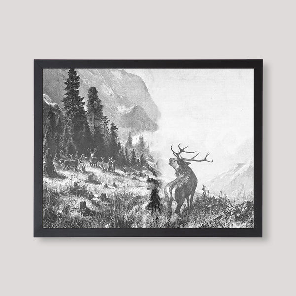 Black and White Illustration of Deer