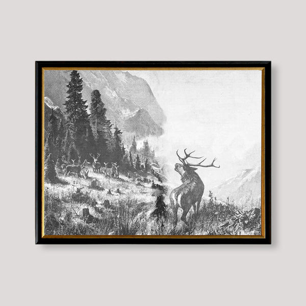 Vintage Drawing of Deer