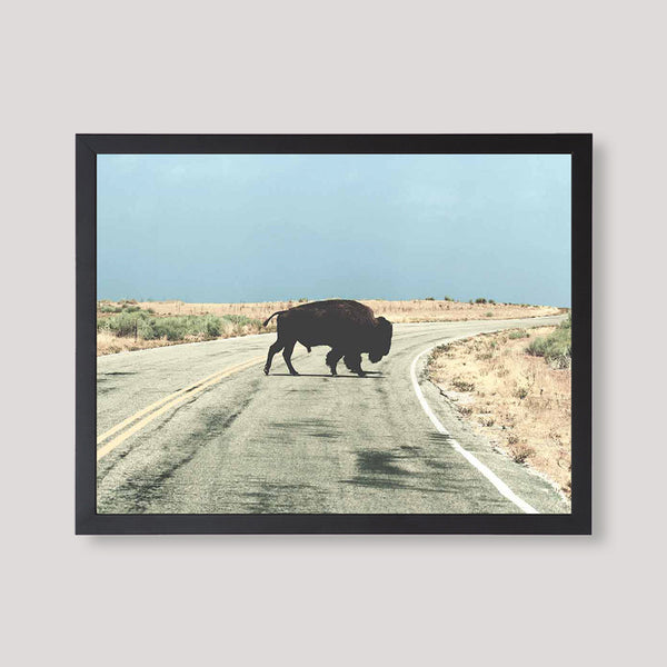Free American Bison