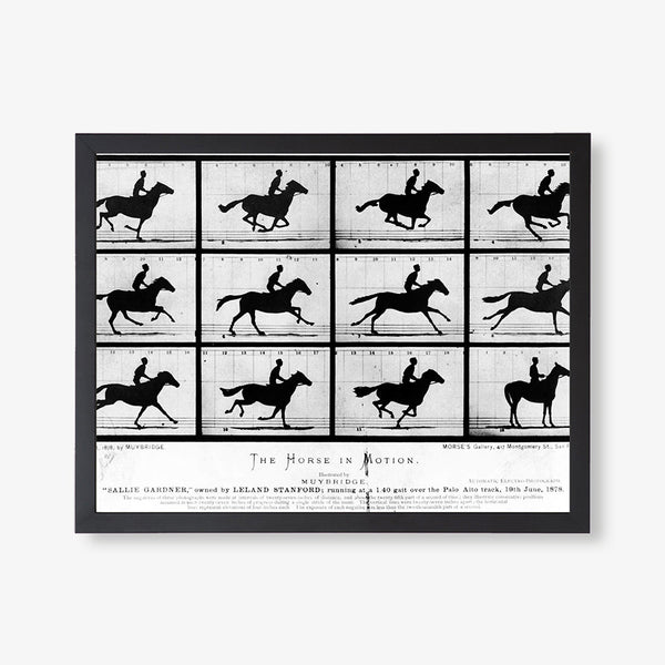 antique photographs of trotting horse