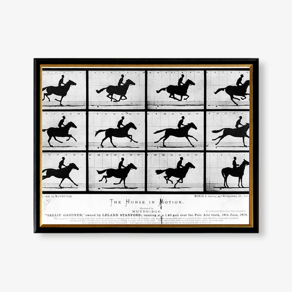 motion images of horse