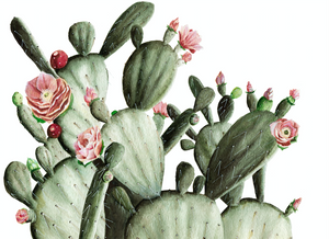 flowering cactus wallpaper