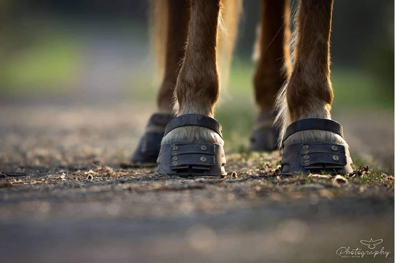 Healthier Hooves