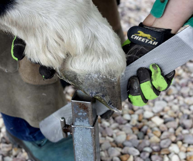 Does your Horse need Hoof Boots?