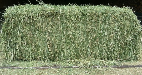 HAY is for HOOVES!