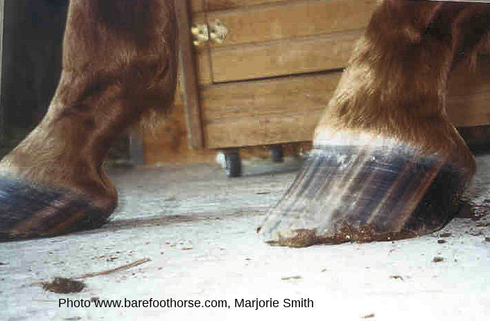 High-Low Hoof Syndrome