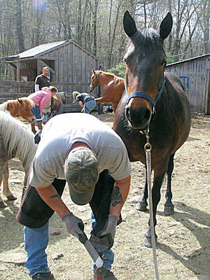 A farrier performing a barefoot trim on a horse's hoof