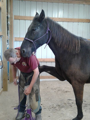 A farrier rasping a horse's hoof wall in a barefoot trim