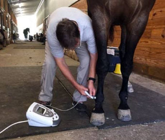 A male veterinarian performing laser therapy on a black horse
