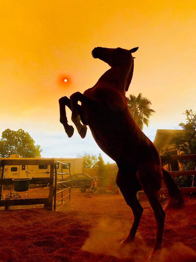 A brown horse rearing up in front of a red sun in the desert