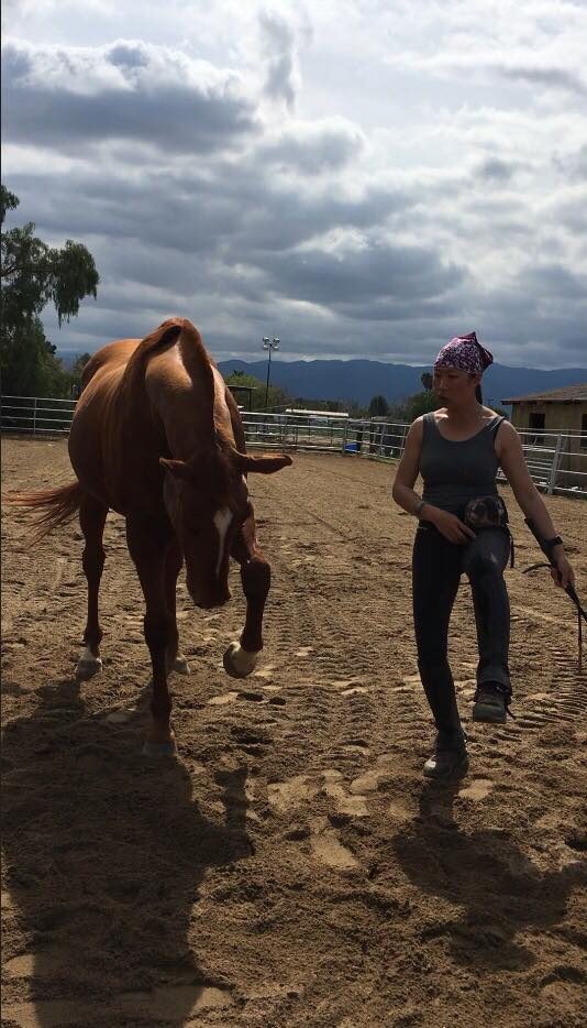Dawn Champion practicing liberty with her brown horse in the sand arena