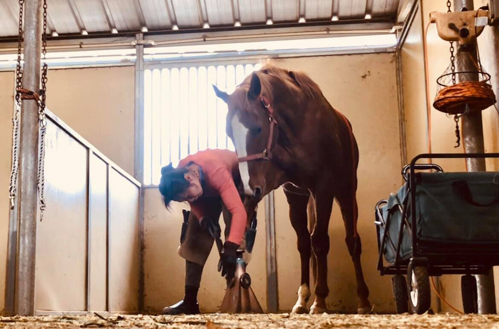 Dawn Champion performing a barefoot trim on a brown horse in a stable