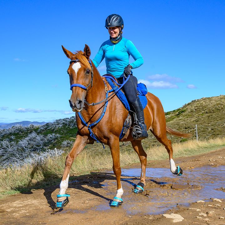 Rider wearing matching blue clothing riding a horse wearing blue Scoot Boots