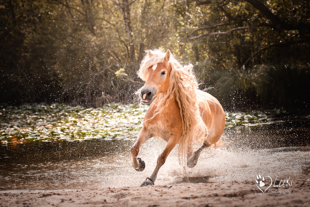 A beautiful beige horse running through sand and water