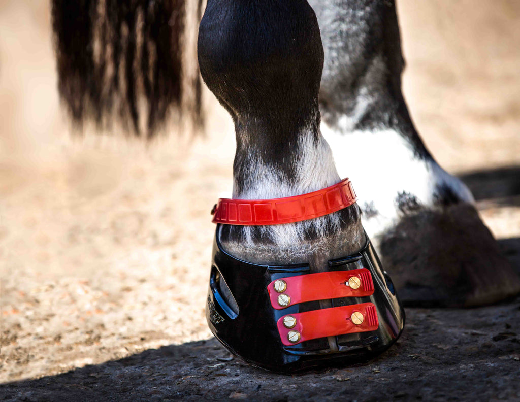 A black and white horse posing in red Scoot Boots