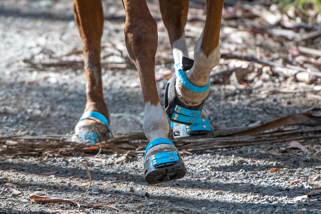 A brown and white horse wearing blue Scoot Boots cantering down a gravel trail