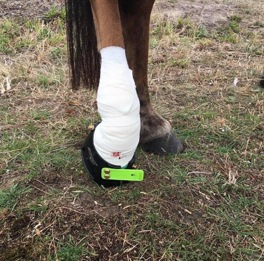 A brown horse wearing a green Scoot Boot with a bloody bandage on her lower limb