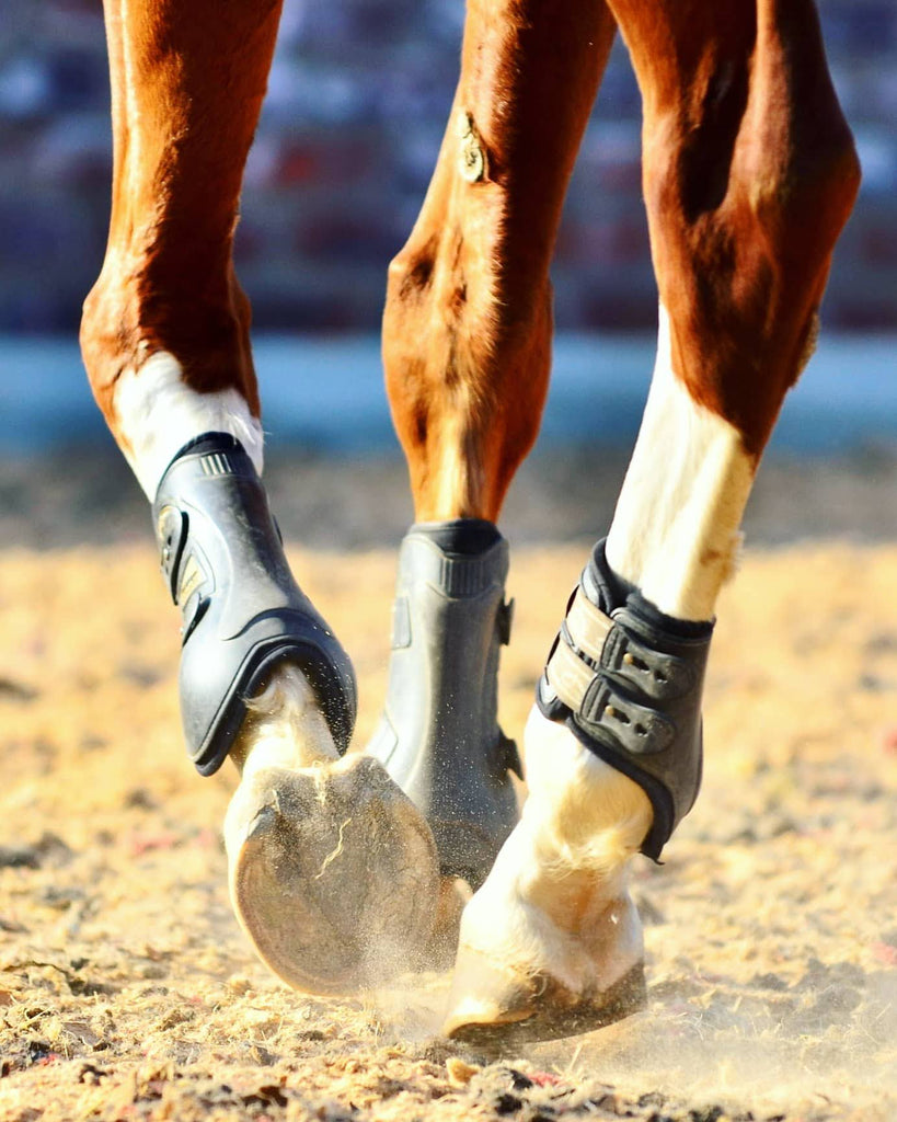 A chestnut and white barefoot horse trotting through a sand arena