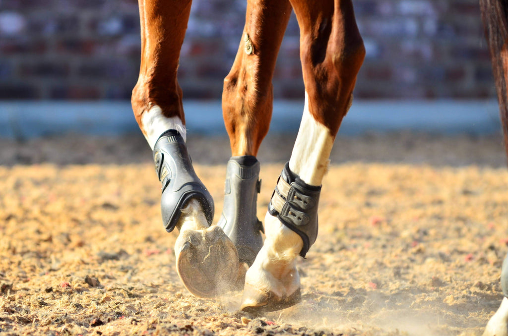 A close up view of a brown and white horse trotting through a sand arena