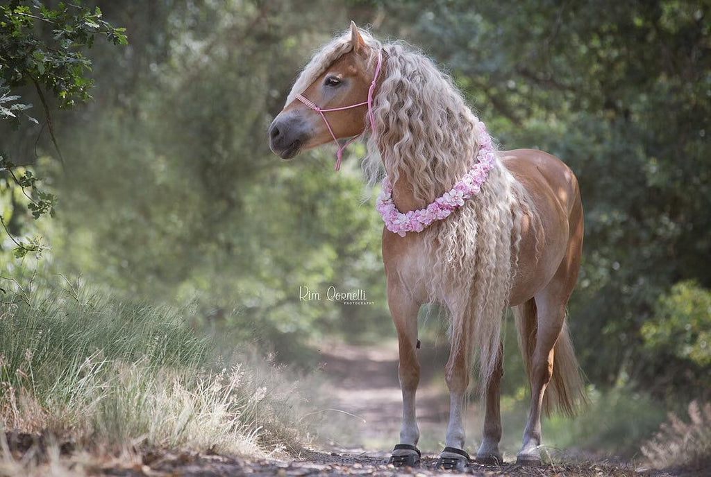 A cream and white coloured how with a wavy mane standing in a forrest wearing black Scoot Boots and a pink flower necklace