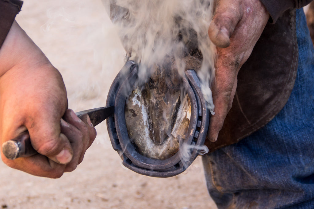 A farrier performing a hot shoe on a horse's hoof