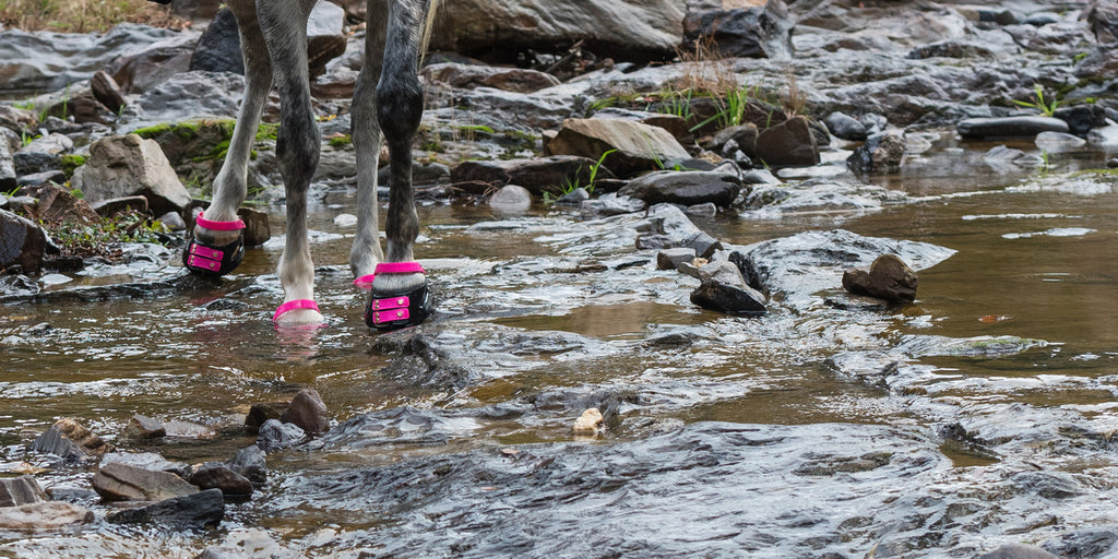 A grey horse wearing pink Scoot Boots walking through a rocky river