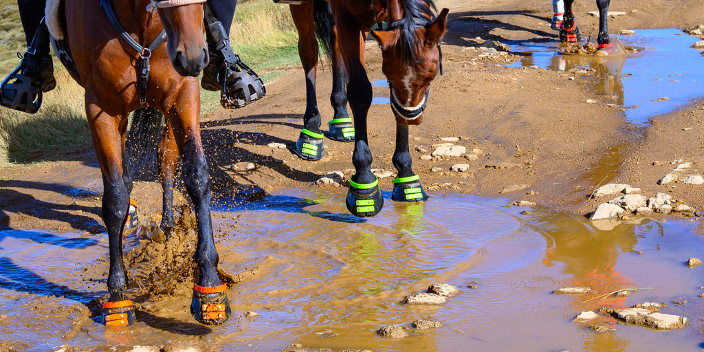 A group of black and brown horses splashing orange, red, and green Scoot Boots through muddy water
