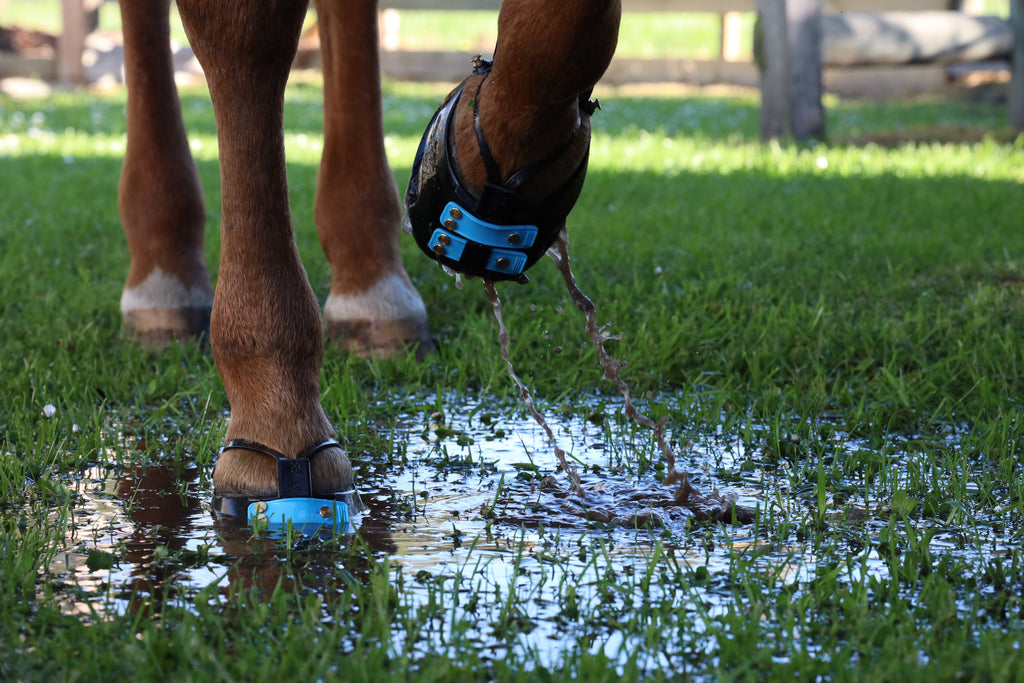 Do you Love the Natural Approach for Your Horse? Then the Barefoot Movement is for you!