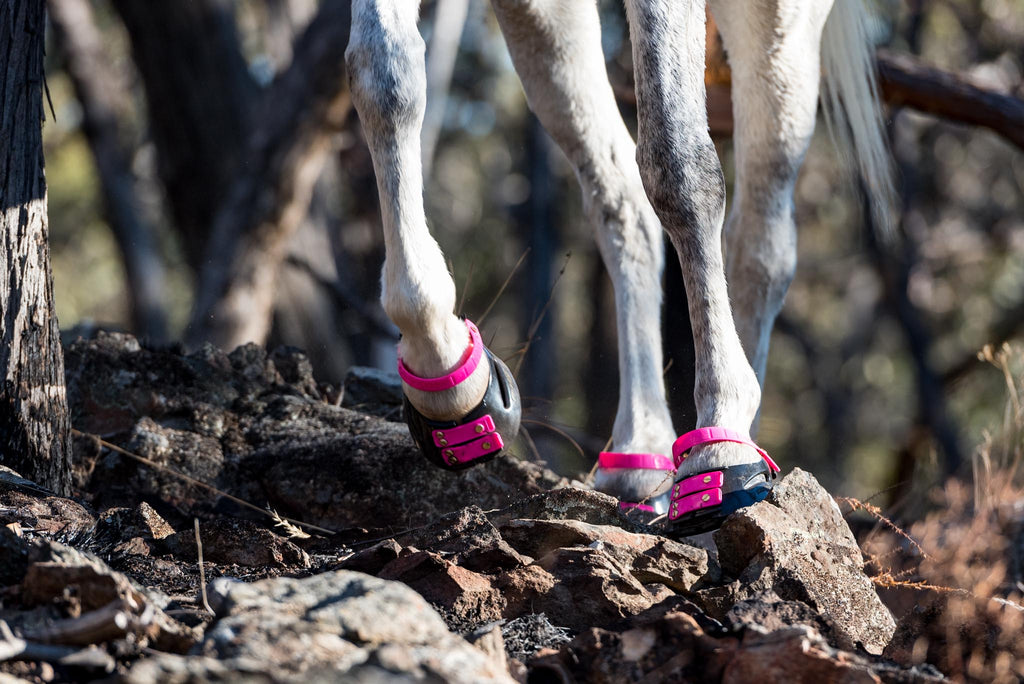 A white horse wearing pink Scoot Boots walking across rocky terrain