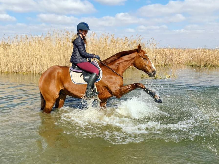 A young woman riding a chestnut gelding through a pond of clear water