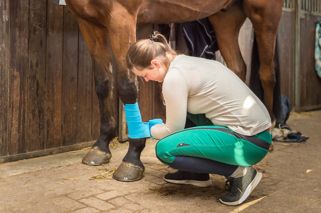 A female veterinarian wrapping a shod horse's lower limb